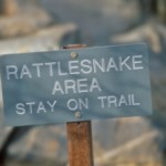 Facts About Snake Bites in Illinois And Some Ways to Keep Safe
