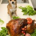 Thanksgiving Day Turkey Disasters