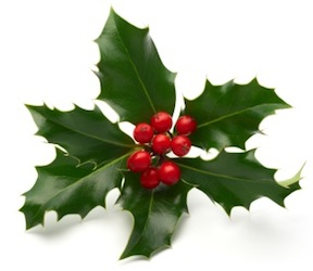 holly is another beautiful plant with lively green leaves and bright red berries they add color to our rooms and gathering places during the holiday season - Christmas Holly Decorations