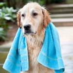 Hot Dog!! - Summer Pet Care