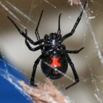 The Do's and Don'ts for Spiders that BITE!