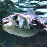 Crazy Fish Stories: Sometimes an ounce of prevention really is worth a pound of cure